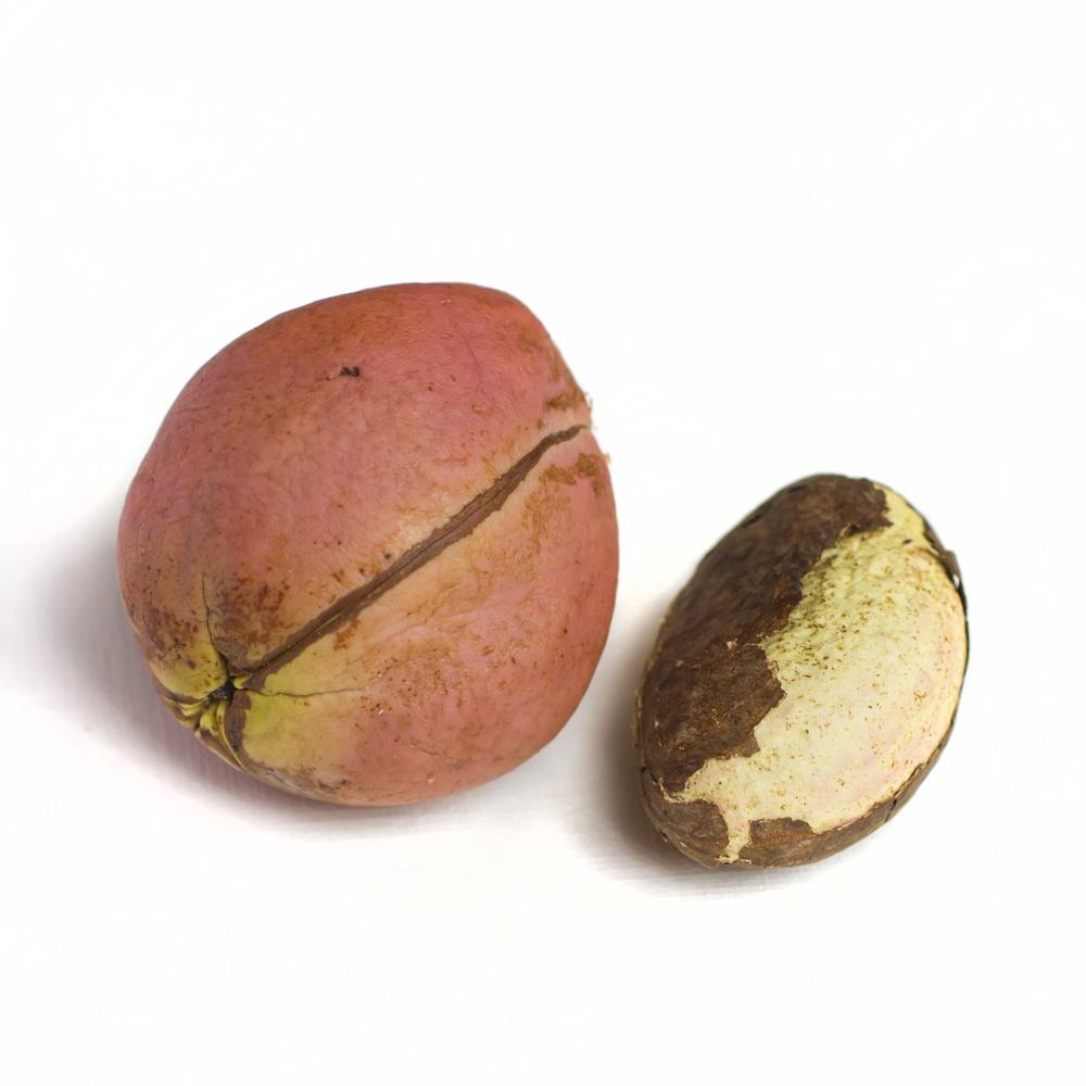 Орехи кола: полезные свойства семян с кофеином